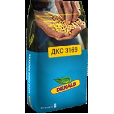 Кукуруза DEKALB ДКС3169