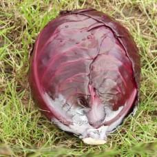 Семена капусты краснокочанной Фуего F1