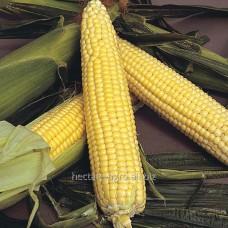 Семена кукурузы Лендмарк F1