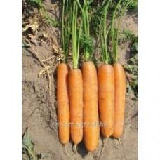 Семена моркови Сатурно F1