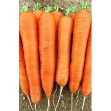 Семена моркови Майор F1