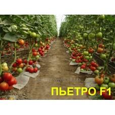 Семена томата Пьетро F1