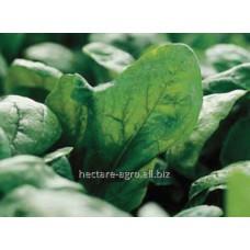 Семена шпината Лагос F1