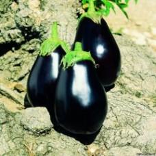 Семена баклажана Галинэ F1