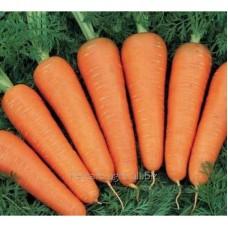 Семена моркови Матч F1