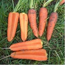 Семена моркови Мирафлорес F1