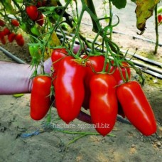 Семена томата Айдар F1