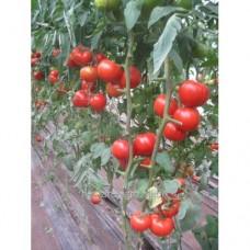 Семена томата К 20.48 F1